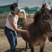 Nuevos refugios para caballos
