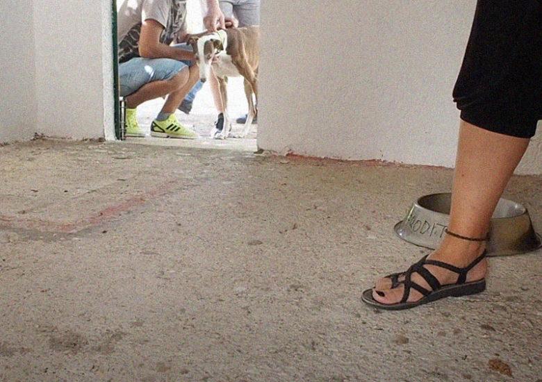 Freesoul, ayuda bidirecciónal que une a perros y personas en prisión